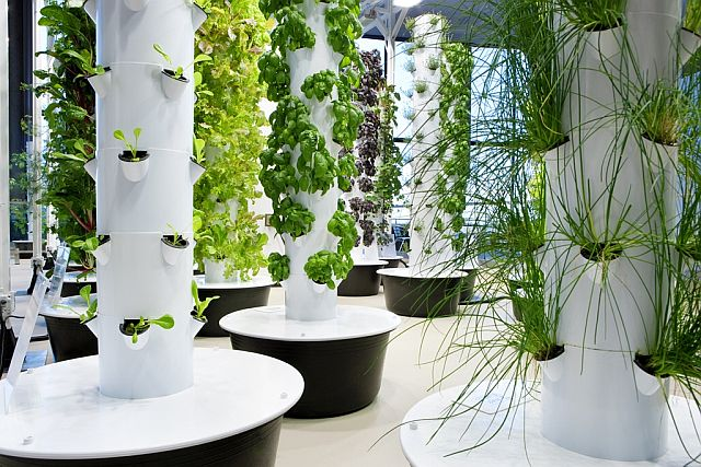 O'Hare's aeroponic garden a ticket to 'green'
