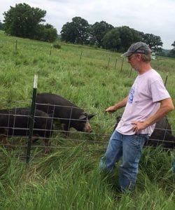 Cliff McConville of All Grass Farm checks his Berkshire hogs. All Grass Farm is a hub in the Fresh Picks Farmer Alliance.